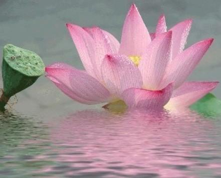 刘师兄——虔诚的佛教居士 培训有感