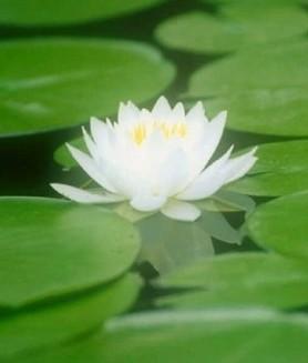 尹师兄——佛教居士-来自湖南