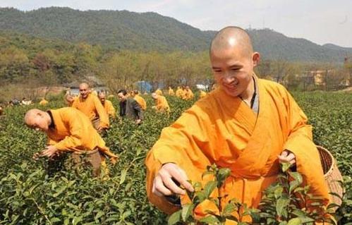 茶对佛教徒的保健作用