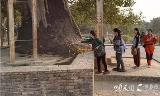 菩提树下灌溉一壶灵泉
