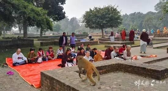 印度佛教现状|印度朝圣