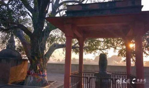 走在佛陀故乡的路上 11.22印度龙8国际娱乐官网记