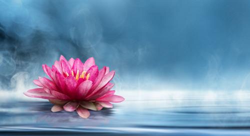 德正推荐:为什么佛菩萨都以莲花为座?