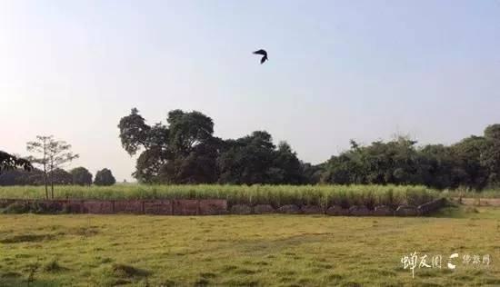 南丹格尔的乌鸦(吉祥之鸟)