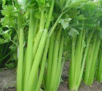 芹菜是蔬菜界的降压神菜!但千万别与它同食
