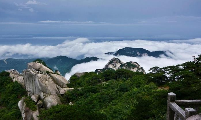 九华山主要药材品种|九华山佛教旅游