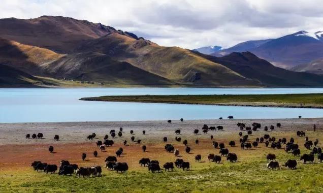 羊卓雍措上的黑珍珠|蝉友圈西藏佛教旅游