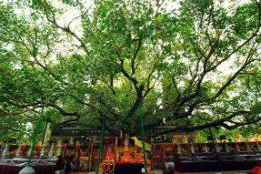 菩提树下我愿成佛 四大皆空找到自我 — 寒假·印度朝圣之旅(六)