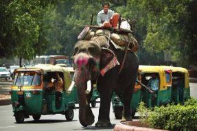 印度般慵懒和西藏式精进,两种生活方式看似截然不同的地方,为何吸引了无数人去朝拜?