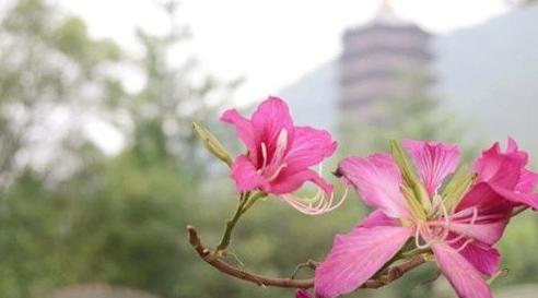 2.8 新春祈福·六祖圣迹