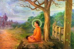 释迦族被灭族 佛陀为何不用神通救度?——蝉友圈佛旅网