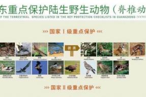 超900种野生动物不能吃!广东率先修法!
