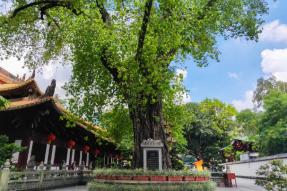 朝礼中国最古老的菩提树_蝉友圈朝礼六祖七大圣迹