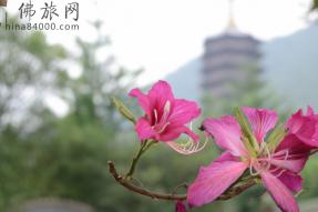 广东即日起恢复跨省团队旅游  附蝉友圈国旅最新排期