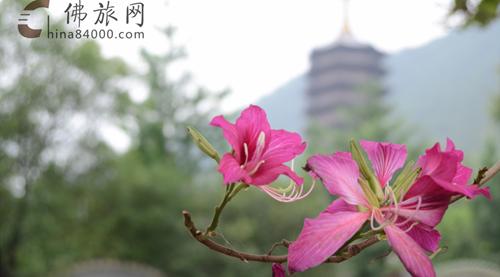 10.27广东六祖八大圣迹